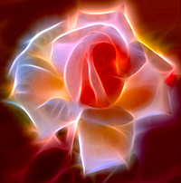 Electric Rose